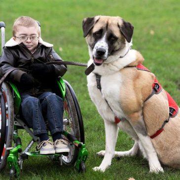 Howkins cane disabile