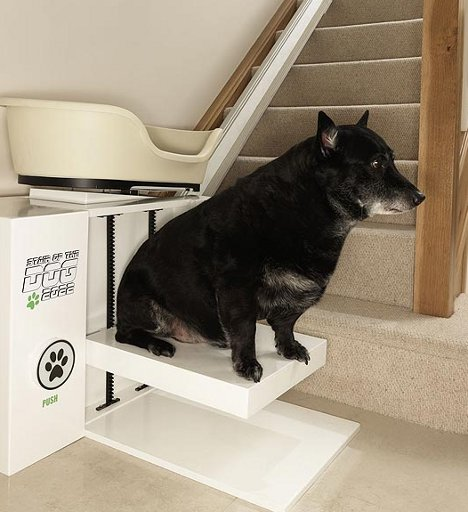 ellenger-cani-obesi-montascale