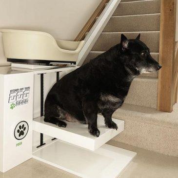 cane obeso su montascale