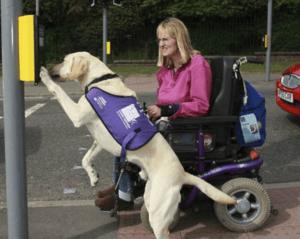 pet-therapy-cani-disabilita