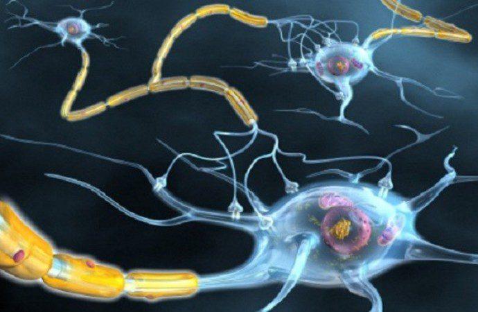 usala-contact-sclerosi-multipla