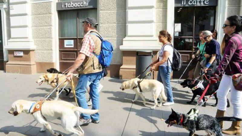 Disabilità sensoriale: ciechi con i loro cani guida